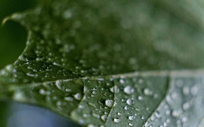 Sfeerbeeld van een groen blad met dauwdruppels